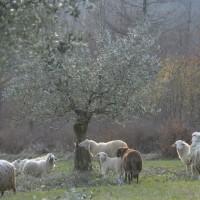 tuscany-organic-farm