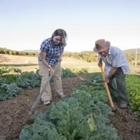 organic-agriturismo-toskana