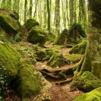 Parco delle Foreste Casentinesi - The Holy forest