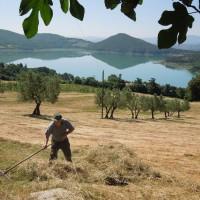 organic-farmhouse-tuscany-Arezzo