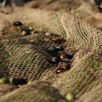 olive-oil-arezzo