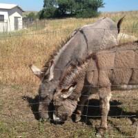 Donkey activities
