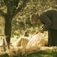 Making olive oil in Tuscany
