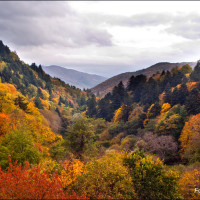 Parco delle Foreste Casentinesi - autumn view