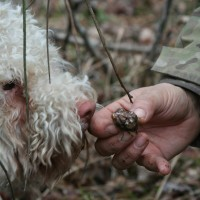 Truffle collecting