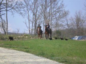 Horseback Riding in Tuscany! Holidays with horse