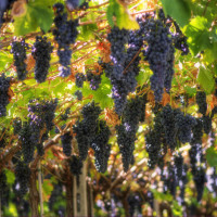 Wine tasting and guided tour