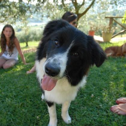 Pet Friendly Farmhouse